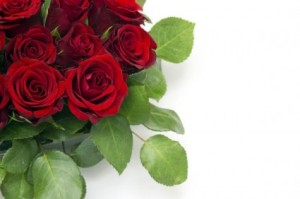 bright_roses